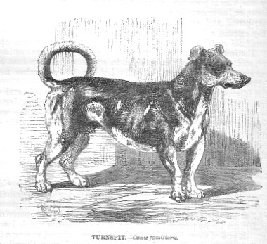 turnspit-dogs-and-boys-turnbroches-and-servants-3.jpg