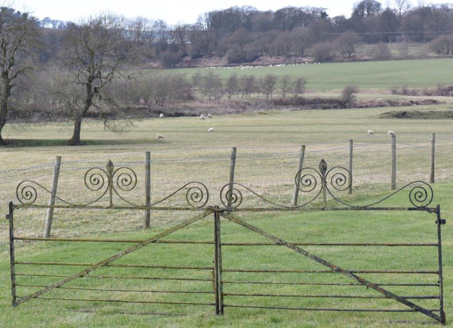 Pair of antique wrought iron gates - 12ft wide