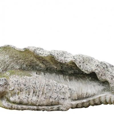 20th Century Portland Limestone Craving- Lazarus In A Conch
